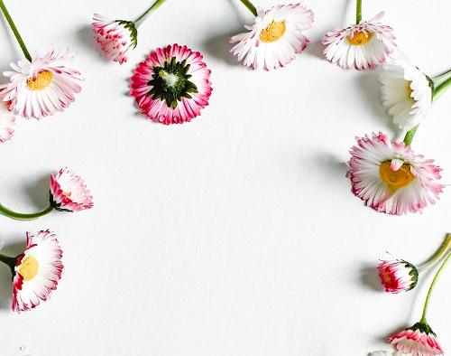 可憐なデイジーの花