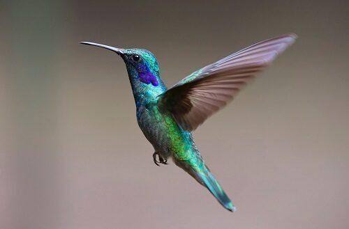 羽を広げて飛び立った美しい緑の小鳥。