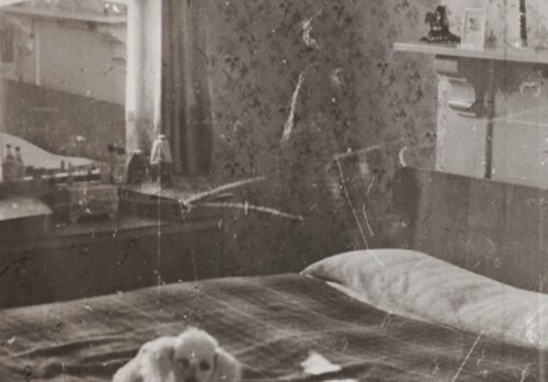 デイジーは母のベッドに寝そべっていた