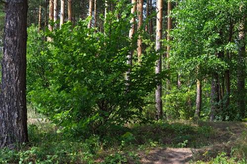 男二人が穴を掘った森の中。